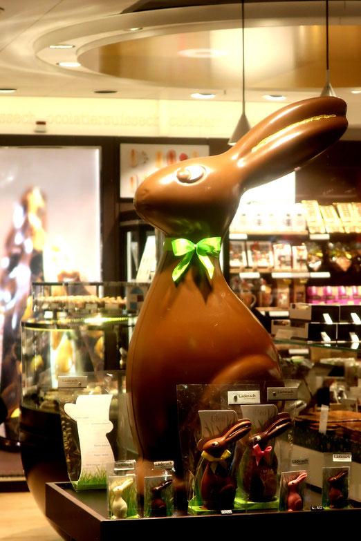 04. März 2020 - Brownie, warum hast du so lange Ohren?