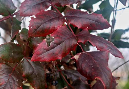 04. März 2021 - Auch der Frühling hat den Herbst nicht vergessen.