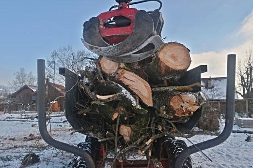 12. Januar 2021 - Ein Jahr lang haben wir gehofft und gebangt. Unsere Baum ist tot. Was von der Trauerweide übrig geblieben ist. Die Trauer.