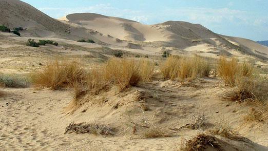 Der Dünenbereich erstreckt sich über eine Fläche von 120km2. Die höchsten Dünen sind bis zu 200 Meter hoch.