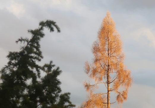 06. April  2018 - Herbst oder Frühling?