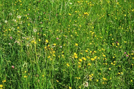 09. Mai 2020 - Anstatt Rasen - Wiese vor dem Haus