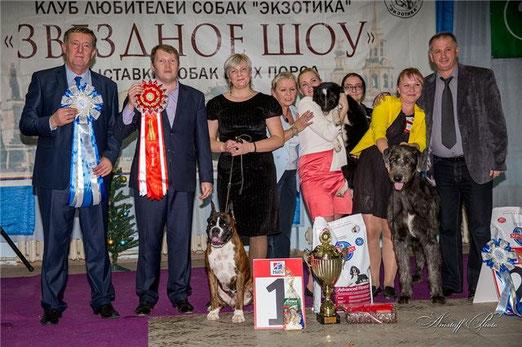Победитель БЕСТ ИН ШОУ, Лучшая собака выставки 15 декабря 2013г в г.Екатеринбург.