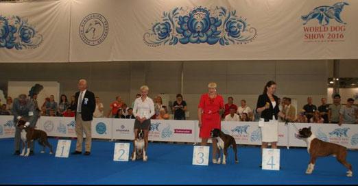 Чемпионат Мира 2016, класс Чемпионов , КРЮШОН 3 место из 16 собак!