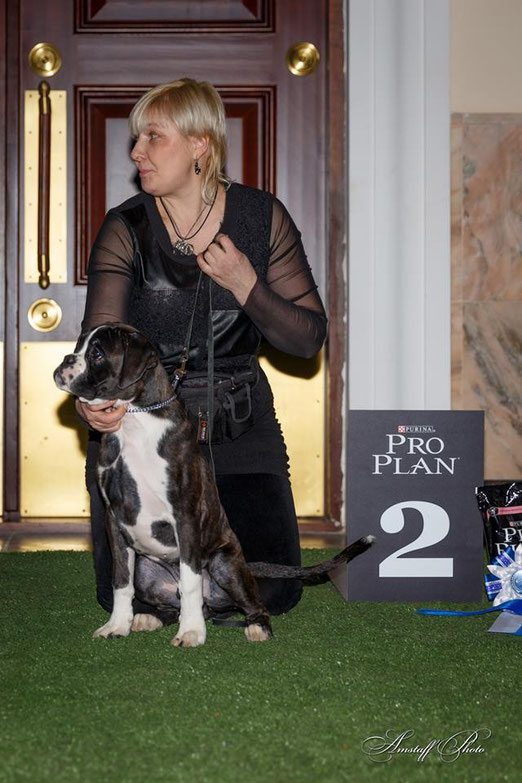 Лучший щенок породы и Победитель БЕСТ БЕБИ 2 место на выставке 26.01.14 в г. Екатеринбург