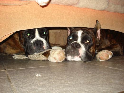 пряталки под диваном.