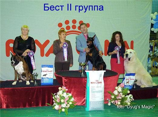Лучший Представитель породы и победитель Бест Групп 2 место на выставке 18 янвапря 2014 г. в г. Кыштым.