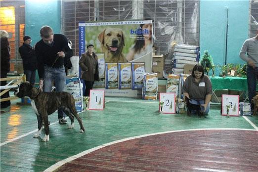 Бест Беби -1 место, ЖАВАНШИР ИЗ МИРА АНДЕЛИКИ, на выставке в Калининграде 15 февраля 2013г.