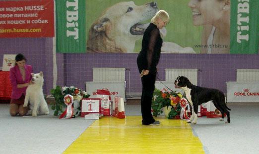 3 мая 2014г, Екатеринбург, Лучший Щенок породы и победитель Бест Щенков 2 место. Трандуил Король Эльфов из мира Анжелики.