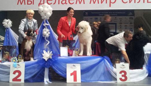 24 ноября 2012 г.  Призер БЕСТ ГРУПП 2 место на выставке в Нижнем Тагиле.
