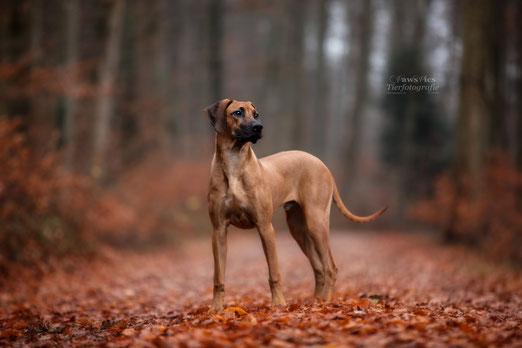 PawsPics, Tierfotografie, Tierbilder, Hundebilder, Hundefotos, Hundefotograf, Tierfotograf, Aargau, Fotoshooting mit Hund