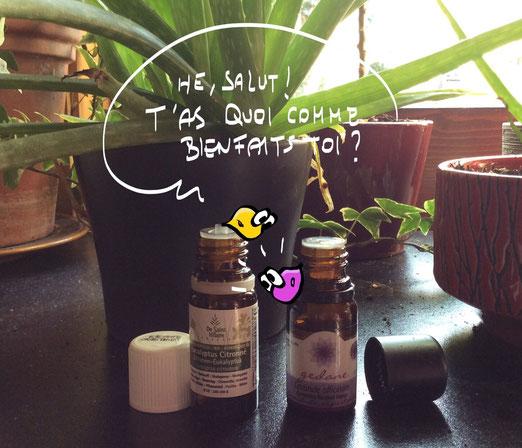 Les huiles essentielles, ces parfaites coéquipières (©Mhyr)