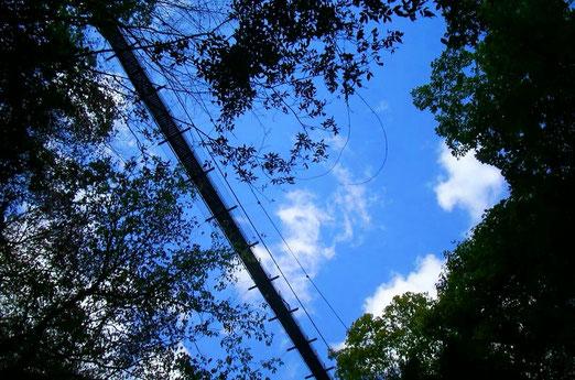 ほしだ園地の高~い吊り橋