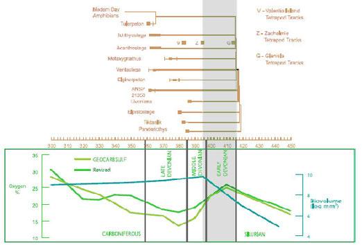 図13.肉鰭類、初期四肢類の出現と酸素分圧の相関