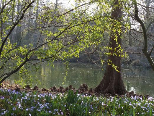 Frühling im Luisenpark 17.3.2014