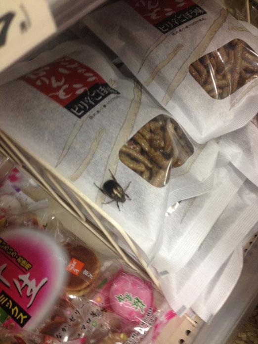 途中スーパーで福原君のグローブの中に紛れ込んだコガネムシ。エサもたくさんあるのでここに置いてき(ry