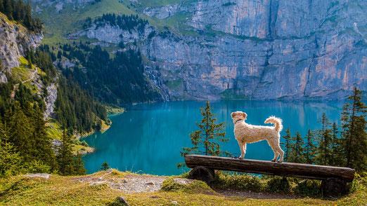 Hund, der auf einer Bank steht und auf einen Bergsee unter ihn blickt.