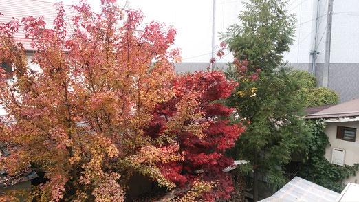 いまいちの紅葉ですが、何とかそれなりですかね?