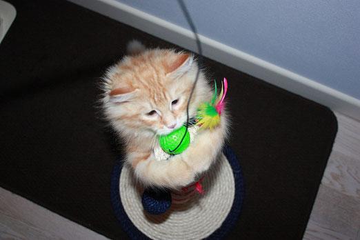 Io ti prendo pallina verde!