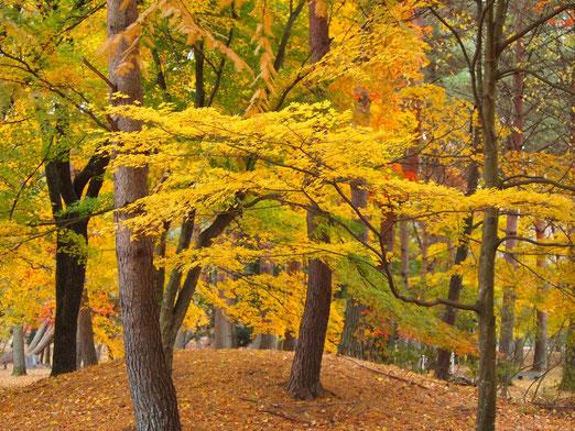 白河 南湖公園11月19日