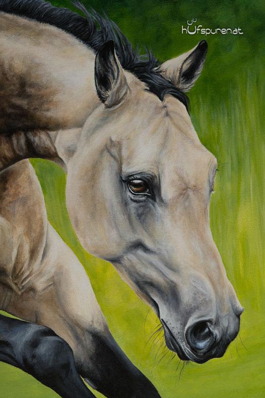Pferdegemälde Detailansicht: Pferdekopf der Buckskin Stute
