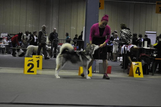 Black Claw's Bakimo Ausstellung Luxemburg vv1 Best Puppy