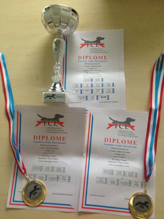 Winanga's Hanami V1 CACL, Bakimo vv1 Best Puppy, Briska (Akeehla) vv1 Best Puppy. 30.08.14 Ausstellung Luxembourg