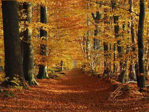 Herbst Impressionen - Deutschland