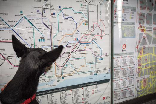 viajar con perros en españa