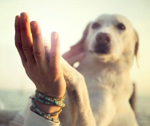 On voit un labrador beige poser sa patte dans la main d'une femme. La femme porte un bracelet de perles d'agates.