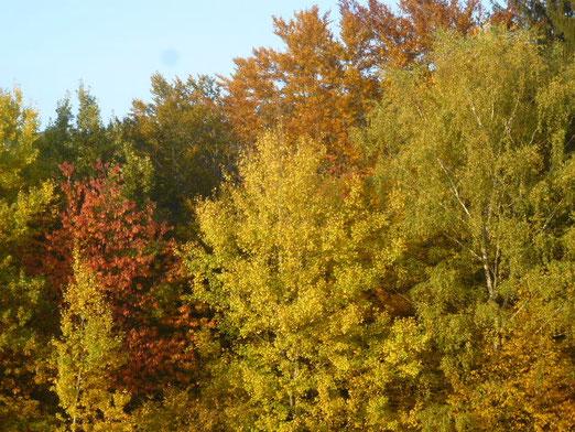 Knallgoldener Oktober