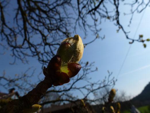 Der Frühling kurz vorm Herausplatzen