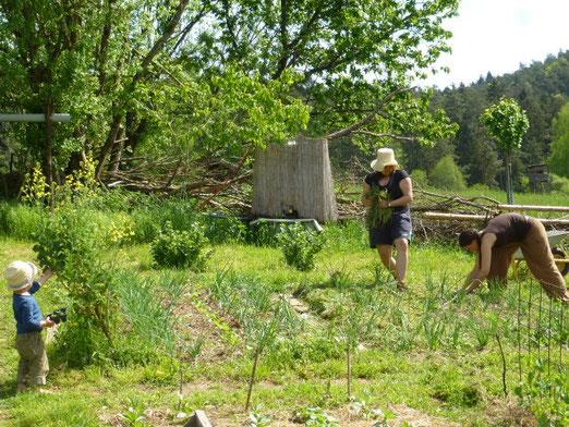 Am Anfang hatten wir einen Garten, nun hat der Garten uns!