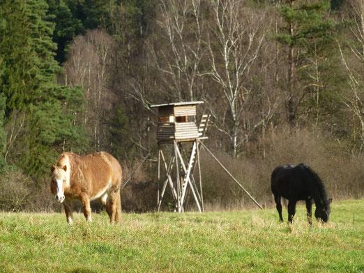 Mabel und Jokota-unsere Pferde