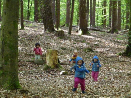 Die Waldkäuzchen