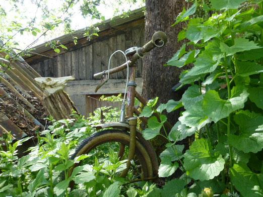 Nelkenwurz, Knoblauchsrauke, altes, rostiges Fahrrad und Wildschweinschädel unter Apfelbaum hinterm Haus und vor der Werkstatt