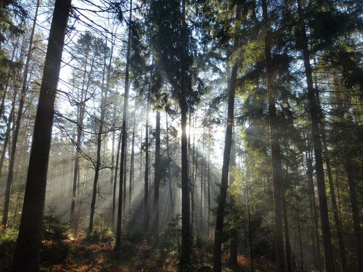 Warme Wald Wintersonne