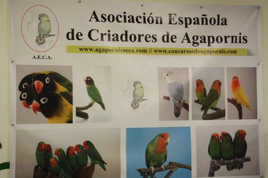 3º Concurso AECA - Cartagena 2012