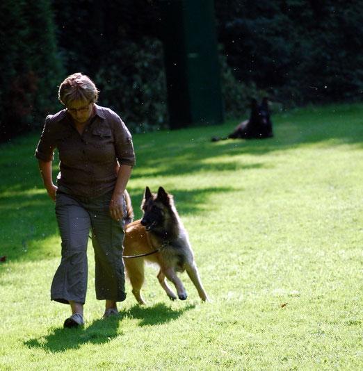 Während Sabine und Leni die Unterordnung laufen, liegt Clint im Hintergrund in der Ablage. Dort sollte er  so lange liegen, bis er von seiner Hundeführerin, in dem Fall Susanne, wieder abgeholt wird.