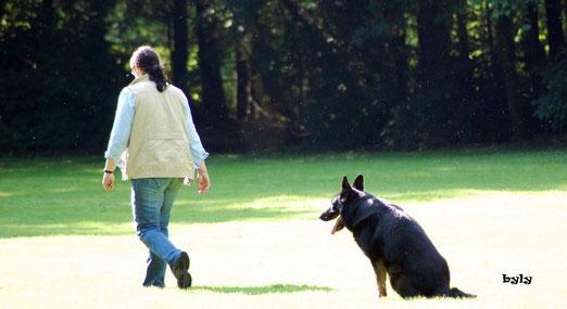 Susann zeigt hier die mit Clint die Sitzübung. Clint hat abzusitzen, während sich die Hundeführerin ca. 20 Schritte entfernt.