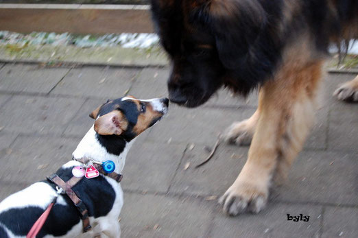 Kuss für Möppel Murphy