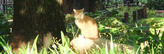 白川公園の早起き猫