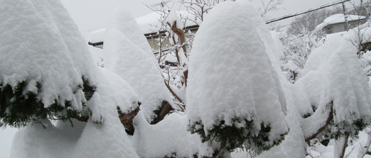 翌日は44cmの積雪でした!