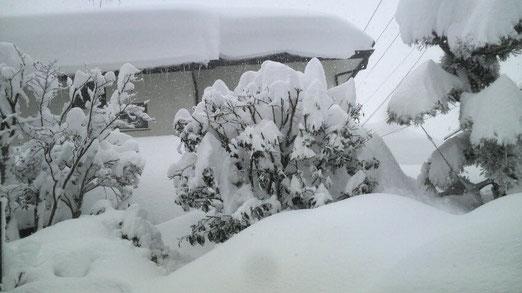 Takano生まれて初めての超積雪!でした