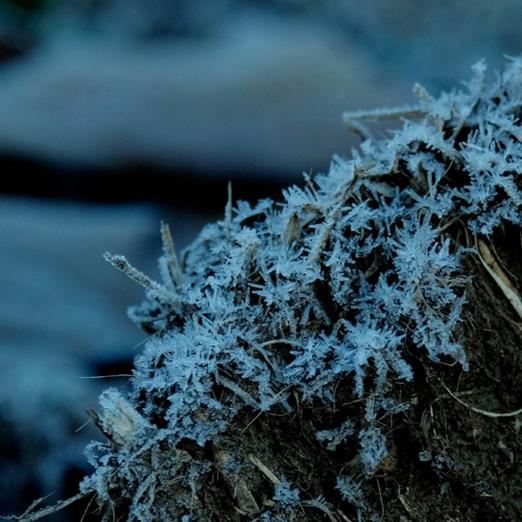 霜や氷、氷柱まで見られる東京の冬はめずらしい