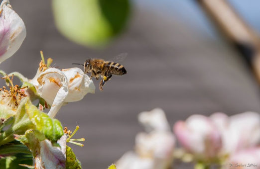 Erster Bienen-Besuch
