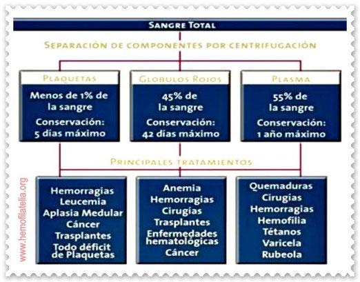Preparación y principales usos de la sangre que donamos.