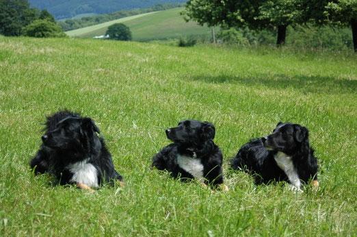 links Spencer, Mitte Jade, rechts Mo                       Fotocredit: Susanne Schwarzmann