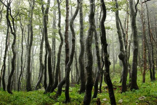 Nationalpark Nördlicher Velebit, Naturwunder Kroatien