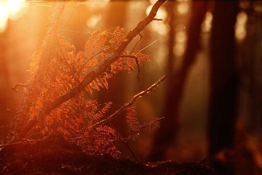 Rückkehr nach der Reise, Leben vor dem Tod, you only live once, Wald